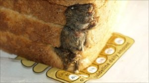 Dead mouse in Hovis loaf