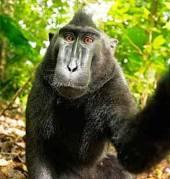 Monkey See - Monkey Do!